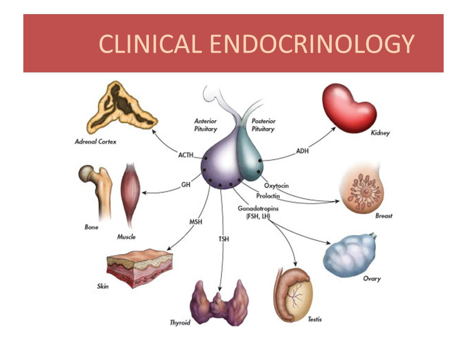 Clinical Endocrinology Software Offline Installer Download